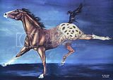 appaloosa